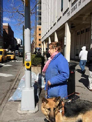 Audrey Schading with her guide dog Dama uses Manhattan's northernmost talking walk signal on the corner of W. 65th St. and Columbus Ave.